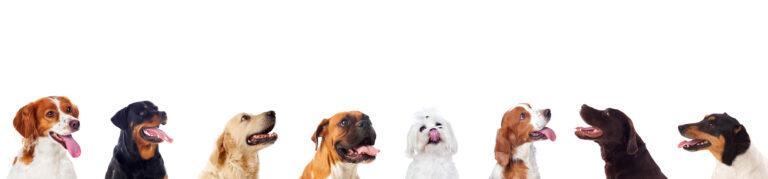 Dog Apparel Company